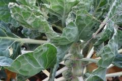 Zimowe warzywa 5