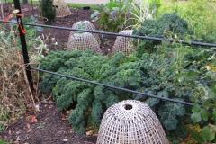 Zimowe warzywa 6